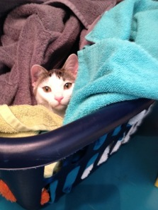 loki laundry